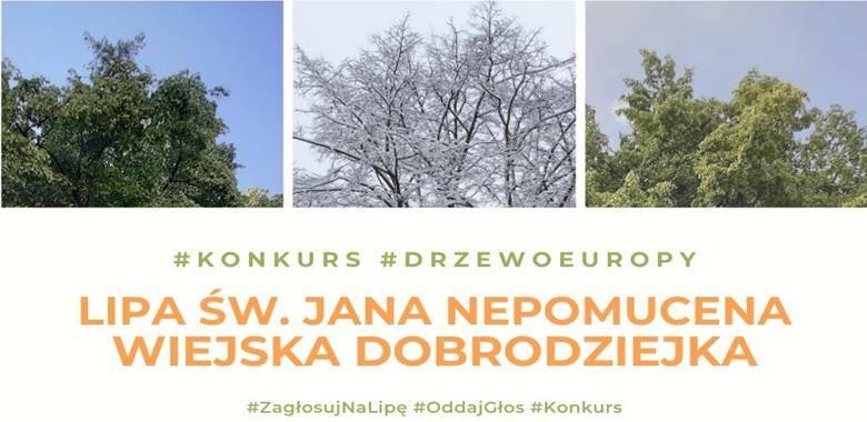 Głosowanie na Europejskie Drzewo Roku 2021